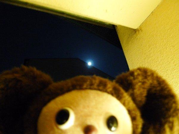 京都 四条大宮 ピッコロジャルディーノ 十五夜お月様
