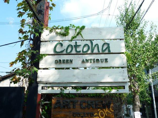 Green & Antique cotoha