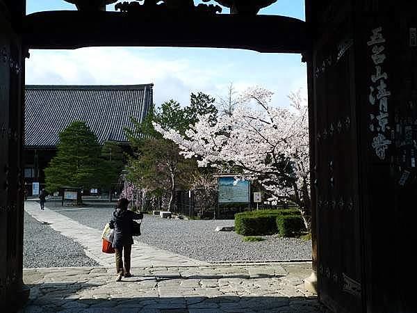清凉寺 桜