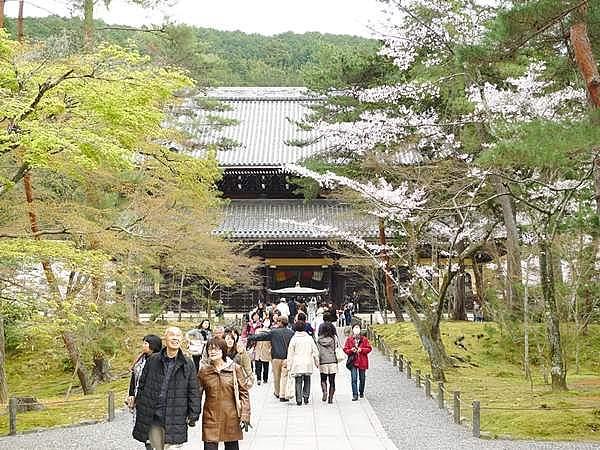 南禅寺 桜
